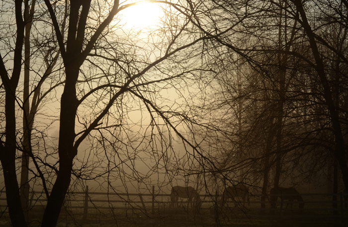 Jersey Fog with Horses Photo by Jay Bryant West Windsor NJ